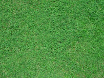 Grass background. Seeing grass detail and texture green color sward Stock Photo
