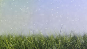 Grass background. With shallow depth of field Royalty Free Stock Photos