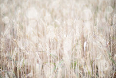 Grass background. Soft focus and vintage effect Stock Photo