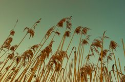 Grass background. Summer blue sky stock images