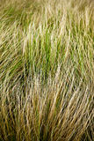 Grass background in Summer Stock Photography