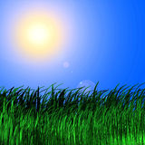 Grass background in sun. 3d render of grass background in sun vector illustration
