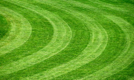 Grass background, texture Stock Photos