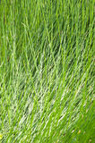 Grass background and texture Royalty Free Stock Image