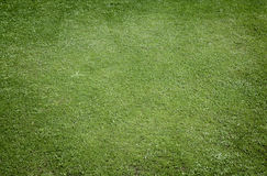 Grass background with texture Stock Photo