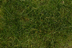 Grass background from top view Royalty Free Stock Image