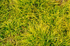 Grass background vibrant color Stock Photos