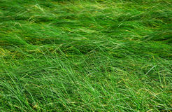 Grass background. Grass wallpaper in high resolution Royalty Free Stock Photo