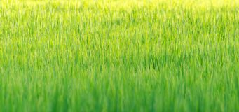 Grass background wallpaper Stock Images