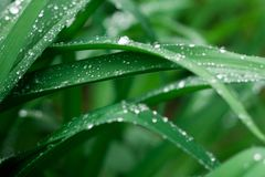 Grass background with water drops stock photos