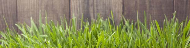 Grass on the background of wood planks, Fresh green lawn near ru. Stic grunge fence Stock Photos