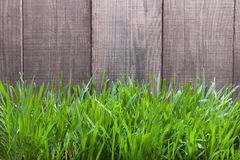 Grass on the background of wood planks, Fresh green lawn near ru Royalty Free Stock Images