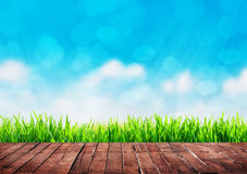 A grass background Royalty Free Stock Photography