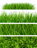 Grass backgrounds Stock Images