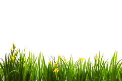 Grass backgrounds Royalty Free Stock Image