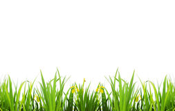 Grass backgrounds Stock Image