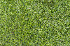 Grass. Backgrounds is color green Stock Image