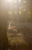 Grass in backlight Stock Photography