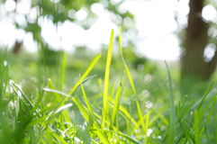 Grass in backlight. Beautiful grass in green backlight Royalty Free Stock Photos