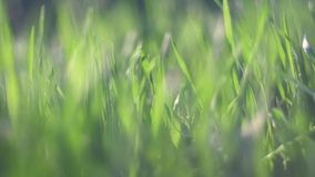 Grass backlit stock footage
