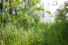 Grass in backyard Royalty Free Stock Photos