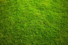 grass on backyard lawn - house, home and gardening concept stock photo