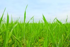 grass on backyard lawn - house, home and gardening concept stock image