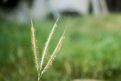 Grass in the backyard Royalty Free Stock Photography