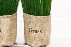 The grass in bag Royalty Free Stock Images