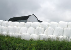 Grass bale Stock Images