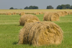 Grass bales for cattle Stock Image