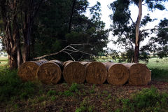 6 grass bales. Six 6 green grass bales bale farm farming farmer agriculture agricultural Stock Photography
