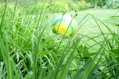 Grass & ball Stock Images