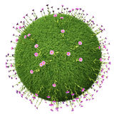Grass ball with pink flowers. Isolated on white background Stock Image