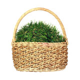 Grass ball in wicker basket. Artificial grass ball in wicker basket isolated Stock Images