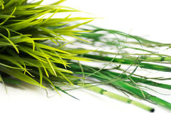 Grass and bamboo. Green Grass and bamboo on white background Royalty Free Stock Images