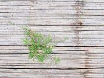 Grass on bamboo floor Stock Image