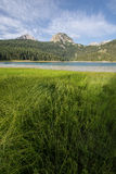 Grass on the bank of the black lake Stock Photo