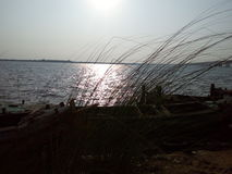 The Grass On The Bank Of The River Godavari Stock Image