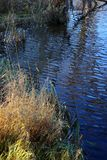 The grass on the banks of the river. Stock Photo