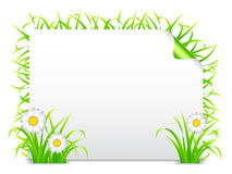 Grass banner. Royalty Free Stock Photos