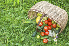 On the grass basket with vegetables. Cucumbers, tomatoes, peppers and apples. Food. Stock Image
