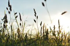 Grass basking in summer sun Royalty Free Stock Image