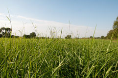 Grass basking in summer sun Royalty Free Stock Photography