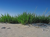 Grass on the beach Stock Photography