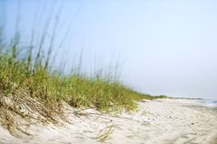 Grass at beach. Sand dune with grass at the beach Stock Photos