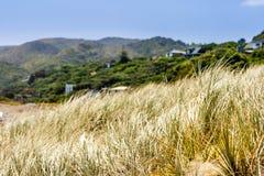 Grass on a beach. Native New Zealand vegetation on a sandy beach, New Zealand stock images
