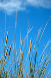 Grass on the beach. And blue sky stock image