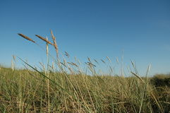 Grass on beach. A windy day Royalty Free Stock Photography