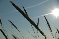 Grass on beach. With sun in background Stock Photos